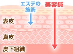 皮下組織の図